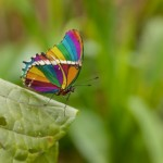 Rainbow-butterfly The Bridge MAG image
