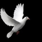 L'espoir est une perche tendue, si fine soit-elle, sur laquelle on peut s'accrocher. The Bridge Magazine termine l'année 2015 sur une note d'espoir, en souhaitant la paix pour la saison et la Yuletide dans toute sa splendeur aux enfants du monde entier. The Bridge MAG. Image