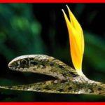 La métaphore qui résume mieux la secte est un emprunt à la tragédie de William Shakespeare dans McBeth « Sois le serpent caché sous la fleur innocente ». En d'autres termes, 'Pour leurrer le monde, ressemble au monde; ressemble à l'innocente fleur, mais sois le serpent qu'elle cache ' The Bridge MAG. Image