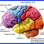Les chercheurs ont constaté que la partie du cerveau qui traite nos pensées positives commence à s'affaiblir et à développer des pensées négatives lorsque nous n'avons pas assez de sommeil. The Bridge MAG. Image
